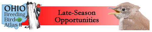 Late-season Opportunities